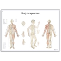 Picture of Body Acupuncture Chart
